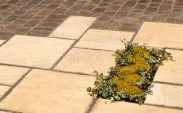 Jardim que pavimenta inserir da planta do detalhe Imagens de Stock Royalty Free
