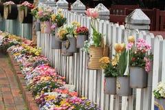 Jardim reciclado das latas fotos de stock royalty free