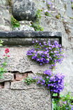 Jardim romântico do detalhe Fotos de Stock Royalty Free