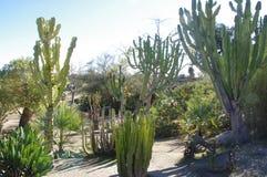 Jardim seco do cacto foto de stock
