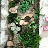 Jardim secreto Foto de Stock Royalty Free