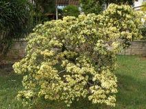 Jardim secreto com planta-detalhes mediteranian fotografia de stock royalty free