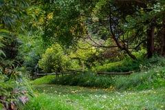 Jardim selvagem 4 Fotografia de Stock Royalty Free