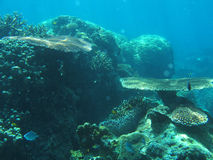 Jardim subaquático imagens de stock