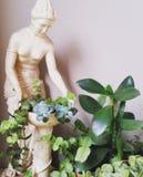 jardim suculento pequeno Foto de Stock Royalty Free