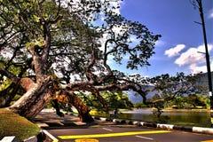 Jardim Taiping Malásia da opinião do lago fotos de stock