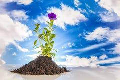 Jardim, tema de jardinagem com luz - fundo azul Foto de Stock