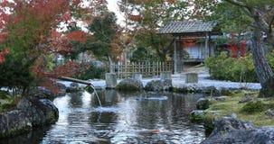 Jardim tradicional japonês no parque no outono em Shizuoka Japão vídeos de arquivo