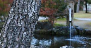 Jardim tradicional japonês no parque no outono em Shizuoka Japão video estoque