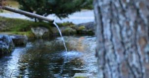 Jardim tradicional japonês no parque no outono em Shizuoka Japão filme