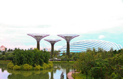 Jardim Tree1 Foto de Stock Royalty Free