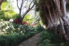 Jardim tropical Imagens de Stock