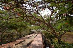 Jardim tropical Fotografia de Stock Royalty Free
