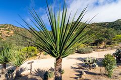 Jardim tropical, Califórnia fotos de stock