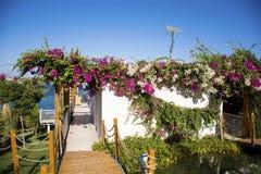 Jardim tropical com palmas e flores das buganvílias Fotos de Stock