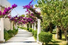 Jardim tropical com palmas e flores das buganvílias Fotos de Stock Royalty Free