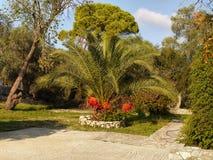 Jardim tropical da palma Fotos de Stock Royalty Free