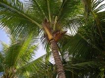 Jardim tropical de Nong Nuch Imagens de Stock Royalty Free
