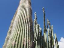 Jardim tropical do cacto Imagens de Stock Royalty Free
