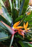 Jardim tropical Madeira Imagem de Stock