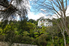 Jardim tropical Madeira Foto de Stock Royalty Free