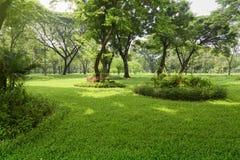 Jardim tropical na luz solar imagem de stock