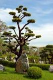 Jardim tropical natural bonito Foto de Stock