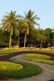 Jardim tropical natural bonito Fotografia de Stock Royalty Free