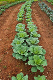 Jardim vegetal Foto de Stock