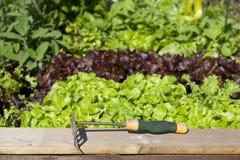 Jardim vegetal Imagens de Stock Royalty Free