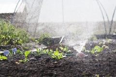 Jardim vegetal fotos de stock