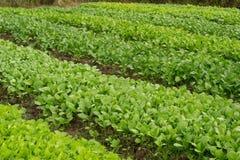 Jardim vegetal Imagem de Stock
