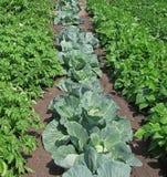 Jardim vegetal Foto de Stock Royalty Free