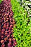 Jardim vegetal bonito Fotografia de Stock