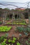 Jardim vegetal cercado pelo fio de galinha Foto de Stock Royalty Free