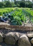 Jardim vegetal com vegetais caseiros Imagem de Stock Royalty Free