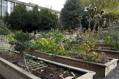Jardim vegetal da cidade Imagem de Stock Royalty Free