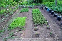 Jardim vegetal da comunidade Foto de Stock Royalty Free