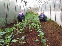 Jardim vegetal da erva daninha da eliminação Imagens de Stock