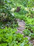 Jardim vegetal da variedade Fotos de Stock