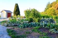 Jardim vegetal home no pátio traseiro Fotos de Stock Royalty Free