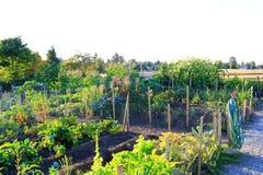 Jardim vegetal home no pátio traseiro Imagens de Stock