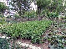 Jardim vegetal luxúria Fotografia de Stock