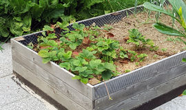 Jardim vegetal nas camas altas do jardim Fotografia de Stock Royalty Free