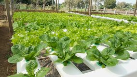 Jardim vegetal no jardim vegetal de Tailândia em Tailândia Imagem de Stock