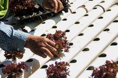 Jardim vegetal orgânico Fotografia de Stock