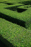 Jardim verde Imagens de Stock Royalty Free