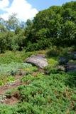Jardim verde Foto de Stock Royalty Free