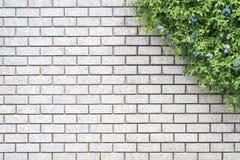 Jardim verde decorativo em uma parede de tijolo Imagem de Stock Royalty Free