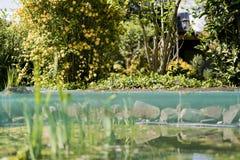 Jardim verde luxúria e lagoa da água Fotos de Stock